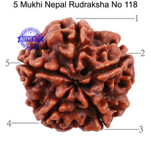 Load image into Gallery viewer, 5 Mukhi Rudraksha from Nepal - Bead No. 118