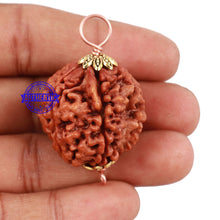Load image into Gallery viewer, 5 Mukhi Rudraksha from Nepal - Bead No. 123
