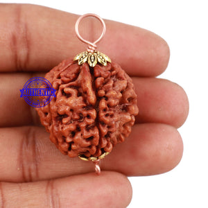5 Mukhi Rudraksha from Nepal - Bead No. 123