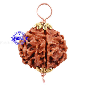5 Mukhi Rudraksha from Nepal - Bead No 124
