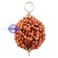 Load image into Gallery viewer, 5 Mukhi Rudraksha from Nepal - Bead No 126