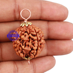 5 Mukhi Rudraksha from Nepal - Bead No 126