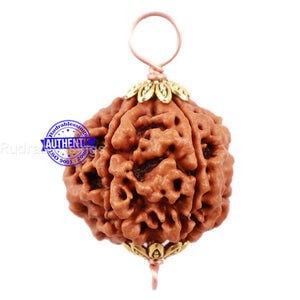 5 Mukhi Rudraksha from Nepal - Bead No 127