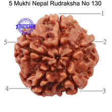 Load image into Gallery viewer, 5 Mukhi Rudraksha from Nepal - Bead No. 130