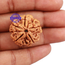 Load image into Gallery viewer, 5 Mukhi Rudraksha from Nepal - Bead No. 131