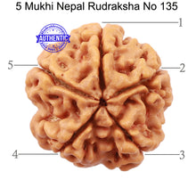 Load image into Gallery viewer, 5 Mukhi Rudraksha from Nepal - Bead No. 135