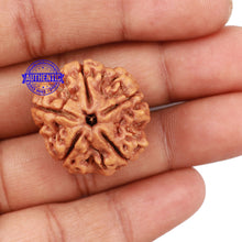 Load image into Gallery viewer, 5 Mukhi Rudraksha from Nepal - Bead No. 141