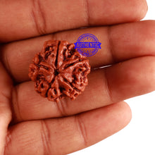 Load image into Gallery viewer, 5 Mukhi Rudraksha from Nepal - Bead No. 214