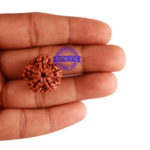 5 Mukhi Rudraksha from Nepal - Bead No. 199