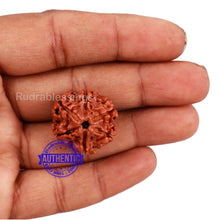 Load image into Gallery viewer, 6 Mukhi Rudraksha from Nepal - Bead No. 153