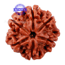 Load image into Gallery viewer, 6 Mukhi Rudraksha from Nepal - Bead No. 160