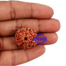 Load image into Gallery viewer, 6 Mukhi Rudraksha from Nepal - Bead No. 165