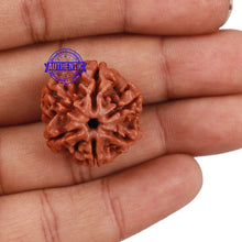 Load image into Gallery viewer, 6 Mukhi Rudraksha from Nepal - Bead No. 168