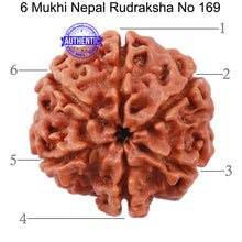 Load image into Gallery viewer, 6 Mukhi Rudraksha from Nepal - Bead No. 169