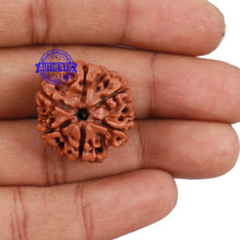 Load image into Gallery viewer, 6 Mukhi Rudraksha from Nepal - Bead No. 170