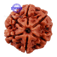 Load image into Gallery viewer, 6 Mukhi Rudraksha from Nepal - Bead No. 171