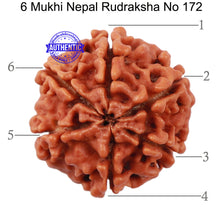 Load image into Gallery viewer, 6 Mukhi Rudraksha from Nepal - Bead No. 172