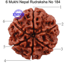 Load image into Gallery viewer, 6 Mukhi Rudraksha from Nepal - Bead No. 184