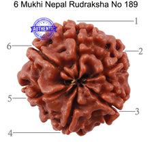 Load image into Gallery viewer, 6 Mukhi Rudraksha from Nepal - Bead No. 189