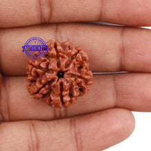 Load image into Gallery viewer, 6 Mukhi Rudraksha from Nepal - Bead No. 191