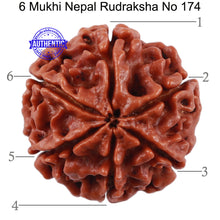 Load image into Gallery viewer, 6 Mukhi Rudraksha from Nepal - Bead No. 174