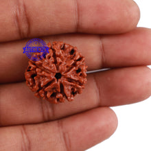 Load image into Gallery viewer, 6 Mukhi Rudraksha from Nepal - Bead No. 181