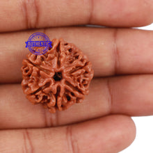 Load image into Gallery viewer, 6 Mukhi Rudraksha from Nepal - Bead No. 202