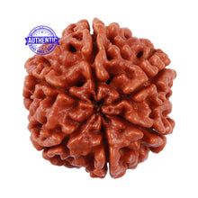 Load image into Gallery viewer, 6 Mukhi Rudraksha from Nepal - Bead No. 205