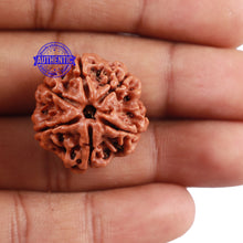 Load image into Gallery viewer, 6 Mukhi Rudraksha from Nepal - Bead No. 209