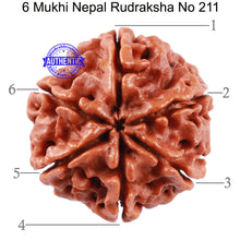 Load image into Gallery viewer, 6 Mukhi Rudraksha from Nepal - Bead No. 211