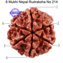 Load image into Gallery viewer, 6 Mukhi Rudraksha from Nepal - Bead No. 214