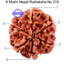 Load image into Gallery viewer, 6 Mukhi Rudraksha from Nepal - Bead No. 215