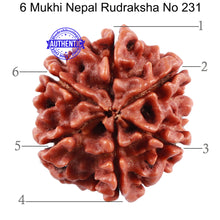 Load image into Gallery viewer, 6 Mukhi Rudraksha from Nepal - Bead No. 231