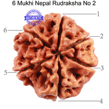 Load image into Gallery viewer, 6 Mukhi Rudraksha from Nepal - Bead No. 2