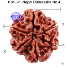 Load image into Gallery viewer, 6 Mukhi Rudraksha from Nepal - Bead No. 4
