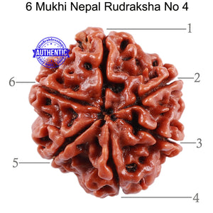 6 Mukhi Rudraksha from Nepal - Bead No. 4