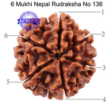 Load image into Gallery viewer, 6 Mukhi Rudraksha from Nepal - Bead No. 136
