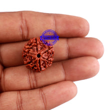 Load image into Gallery viewer, 6 Mukhi Rudraksha from Nepal - Bead No. 29