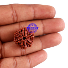 Load image into Gallery viewer, 6 Mukhi Rudraksha from Nepal - Bead No. 32
