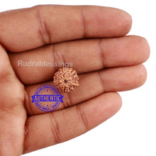 Load image into Gallery viewer, 7 Mukhi Indonesian Ganesh Rudraksha - Bead No. 1