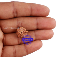 Load image into Gallery viewer, 7 Mukhi Indonesian Ganesh Rudraksha - Bead No. 3
