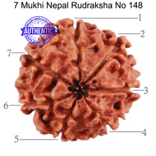 Load image into Gallery viewer, 7 Mukhi Nepalese Rudraksha - Bead No. 148