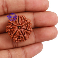 Load image into Gallery viewer, 7 Mukhi Nepalese Rudraksha - Bead No. 121