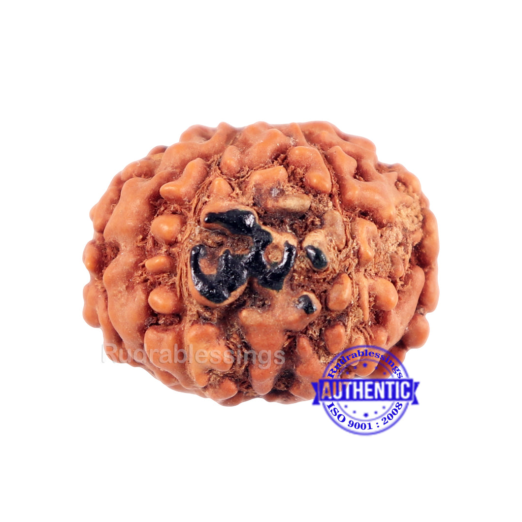 7 Mukhi Indonesian Rudraksha with Om Marking