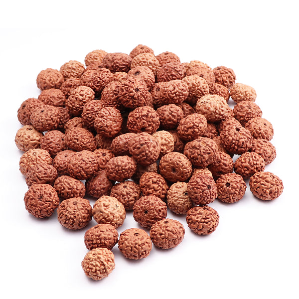 8 Mukhi Rudraksha from Indonesia - 100 Beads Pack