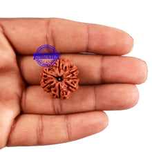 Load image into Gallery viewer, 7 Mukhi Nepalese Rudraksha - Bead No. 175