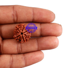 Load image into Gallery viewer, 7 Mukhi Nepalese Rudraksha - Bead No. 191