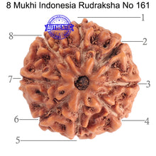 Load image into Gallery viewer, 8 Mukhi Rudraksha from Indonesia - Bead No. 161
