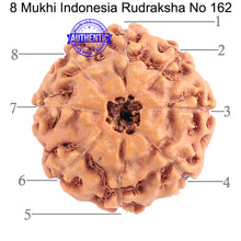 Load image into Gallery viewer, 8 Mukhi Rudraksha from Indonesia - Bead No. 162