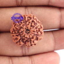 Load image into Gallery viewer, 8 Mukhi Rudraksha from Indonesia - Bead No. 166